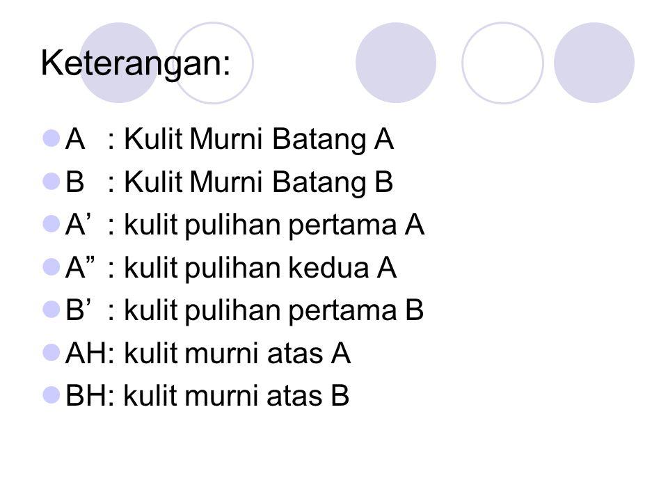 Keterangan: A : Kulit Murni Batang A B : Kulit Murni Batang B