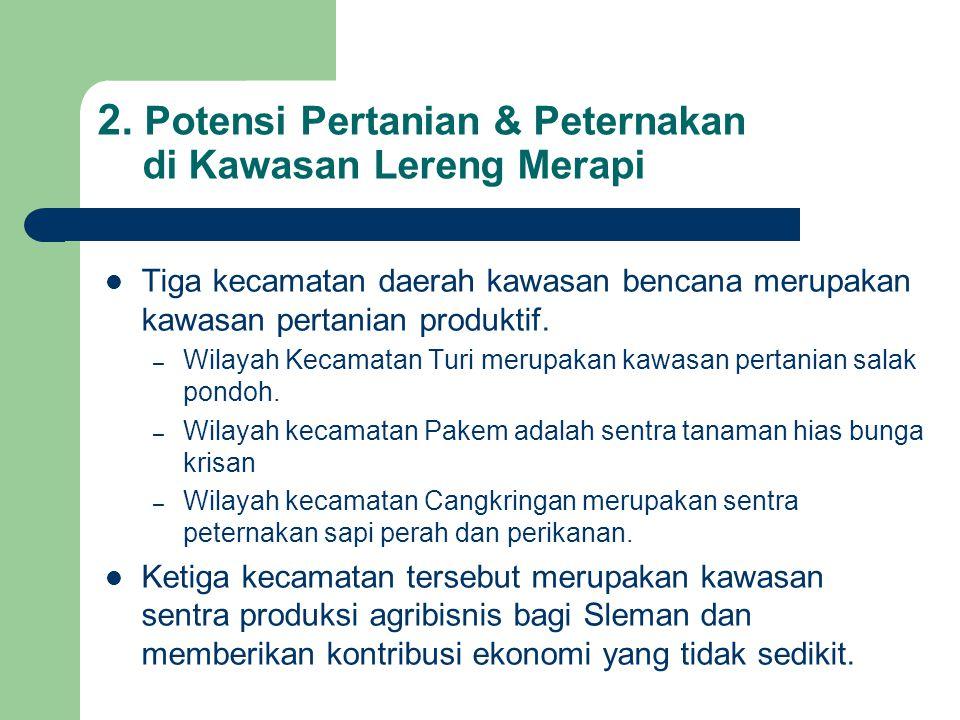 2. Potensi Pertanian & Peternakan di Kawasan Lereng Merapi