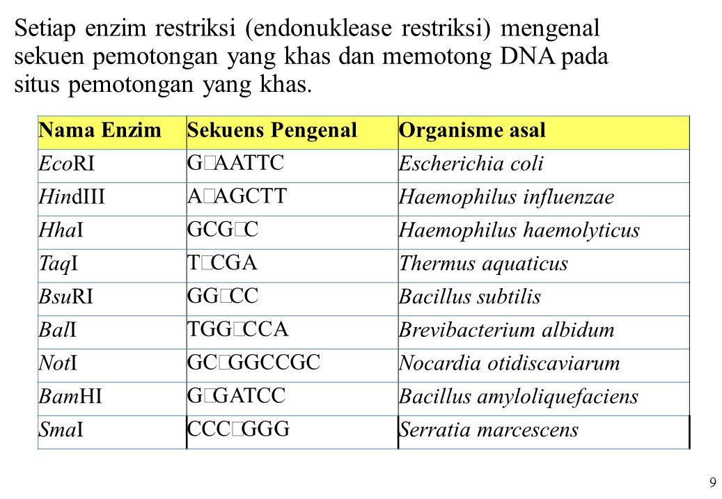 Setiap enzim restriksi (endonuklease restriksi) mengenal