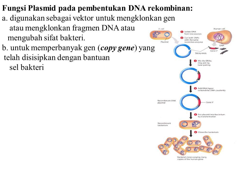 Fungsi Plasmid pada pembentukan DNA rekombinan: