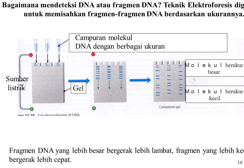 untuk memisahkan fragmen-fragmen DNA berdasarkan ukurannya.