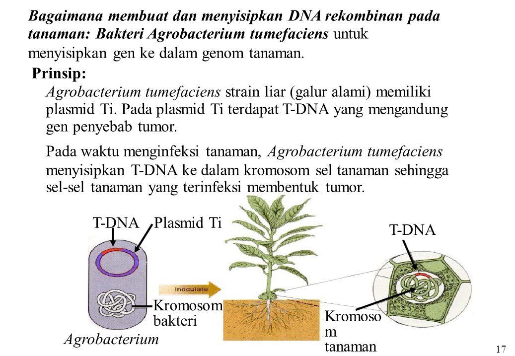 Bagaimana membuat dan menyisipkan DNA rekombinan pada