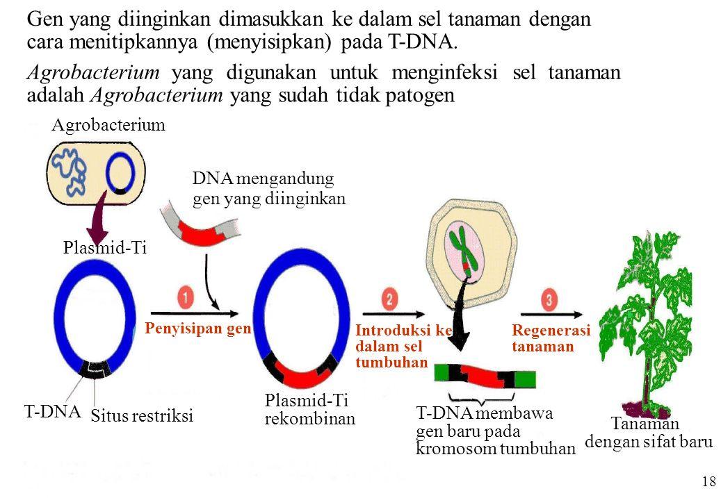 Gen yang diinginkan dimasukkan ke dalam sel tanaman dengan