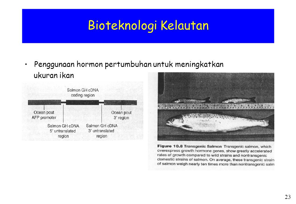 Bioteknologi Kelautan