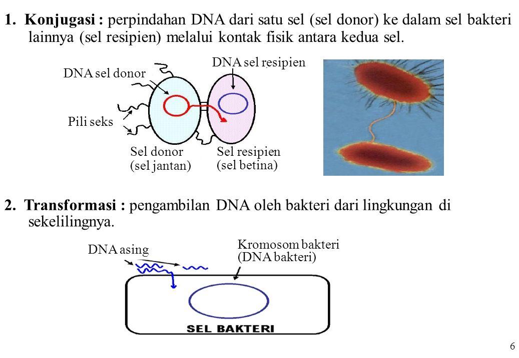 lainnya (sel resipien) melalui kontak fisik antara kedua sel.