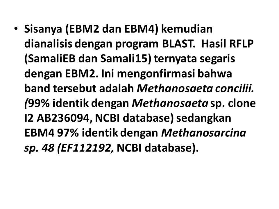 Sisanya (EBM2 dan EBM4) kemudian dianalisis dengan program BLAST