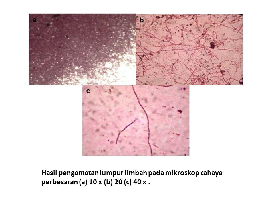 Hasil pengamatan lumpur limbah pada mikroskop cahaya perbesaran (a) 10 x (b) 20 (c) 40 x .