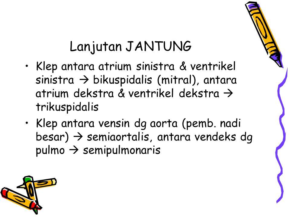 Lanjutan JANTUNG Klep antara atrium sinistra & ventrikel sinistra  bikuspidalis (mitral), antara atrium dekstra & ventrikel dekstra  trikuspidalis.