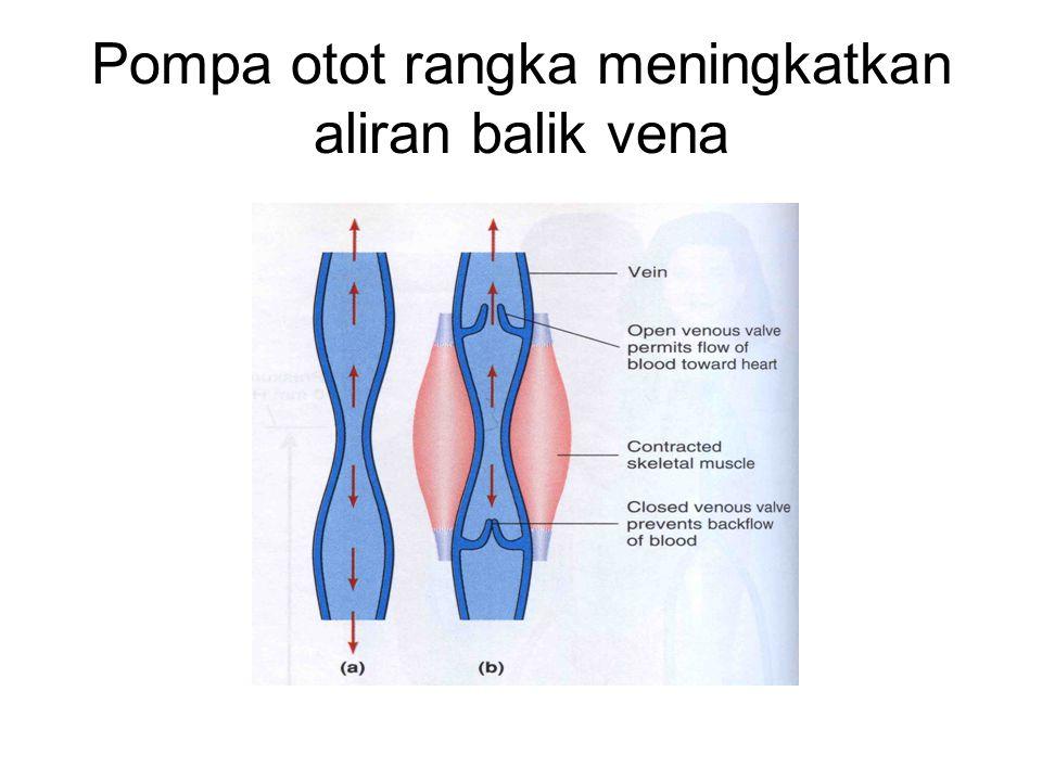 Pompa otot rangka meningkatkan aliran balik vena