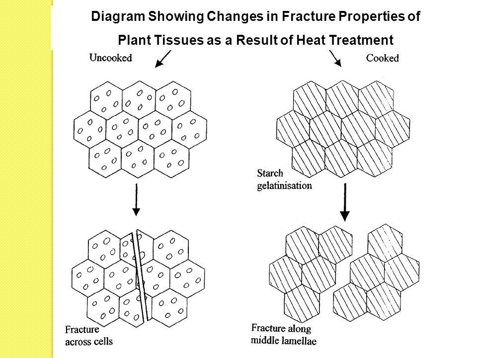 Diagram Showing Changes in Fracture Properties of