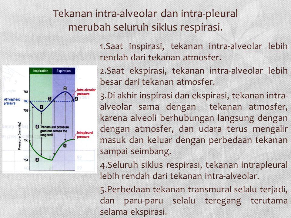 Tekanan intra-alveolar dan intra-pleural merubah seluruh siklus respirasi.
