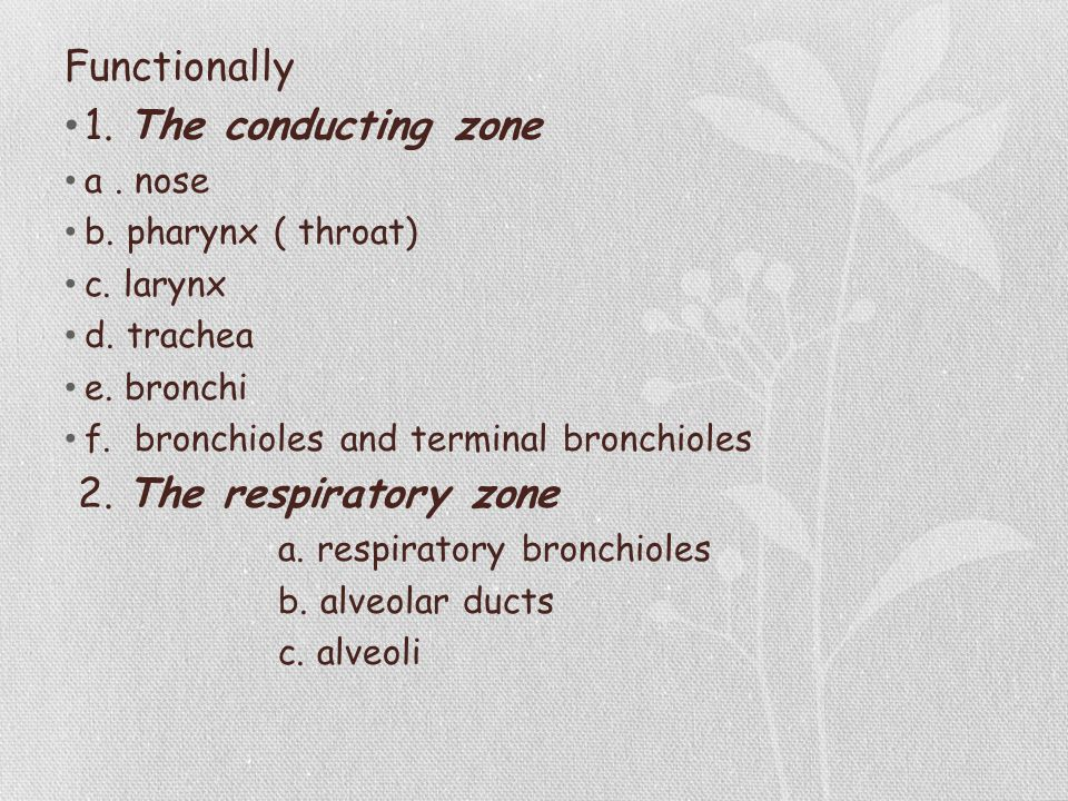 Functionally 1. The conducting zone 2. The respiratory zone a . nose