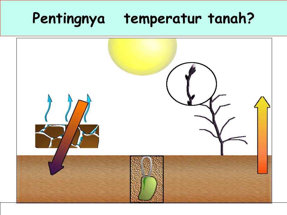 Pentingnya temperatur tanah
