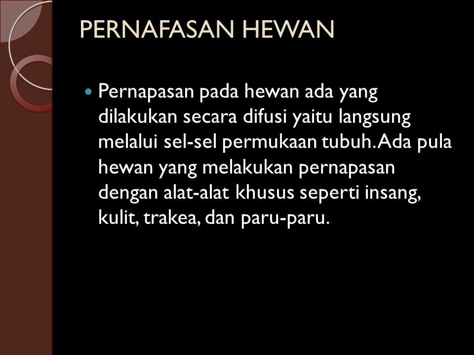 PERNAFASAN HEWAN