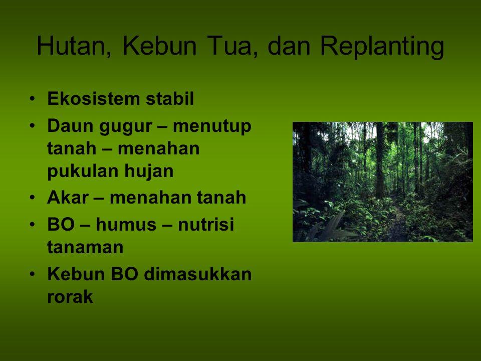Hutan, Kebun Tua, dan Replanting