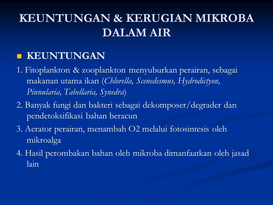 KEUNTUNGAN & KERUGIAN MIKROBA DALAM AIR