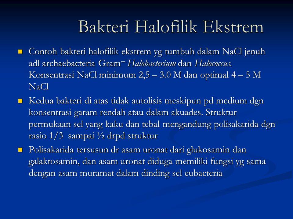 Bakteri Halofilik Ekstrem