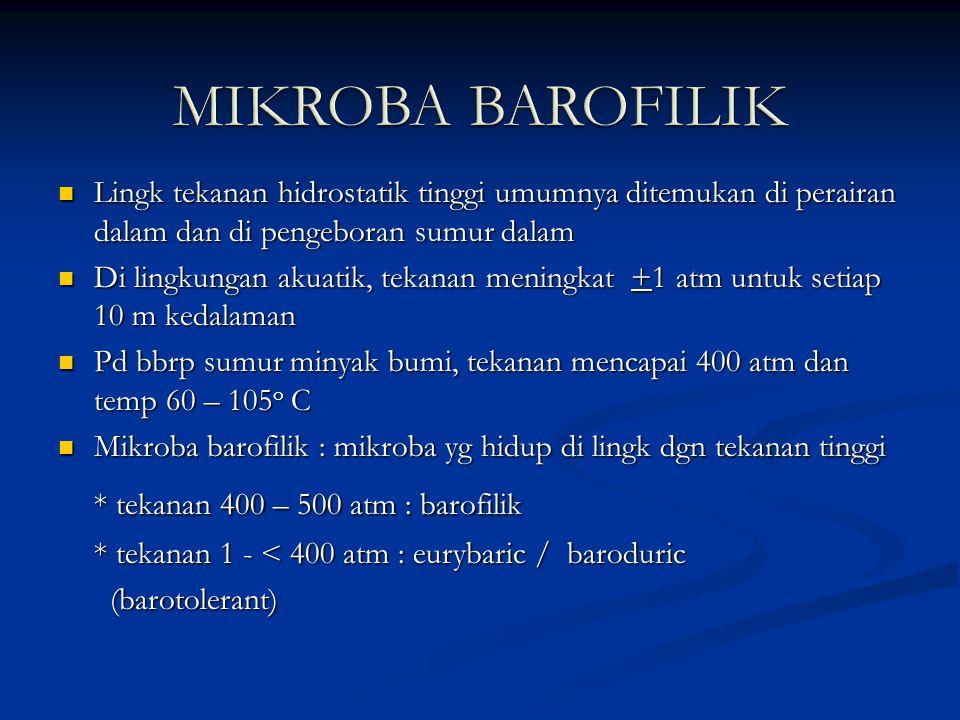 MIKROBA BAROFILIK * tekanan 400 – 500 atm : barofilik