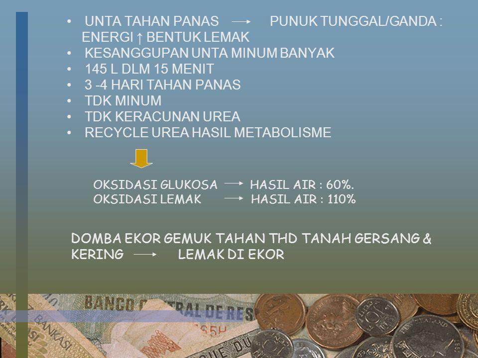UNTA TAHAN PANAS PUNUK TUNGGAL/GANDA : ENERGI ↑ BENTUK LEMAK