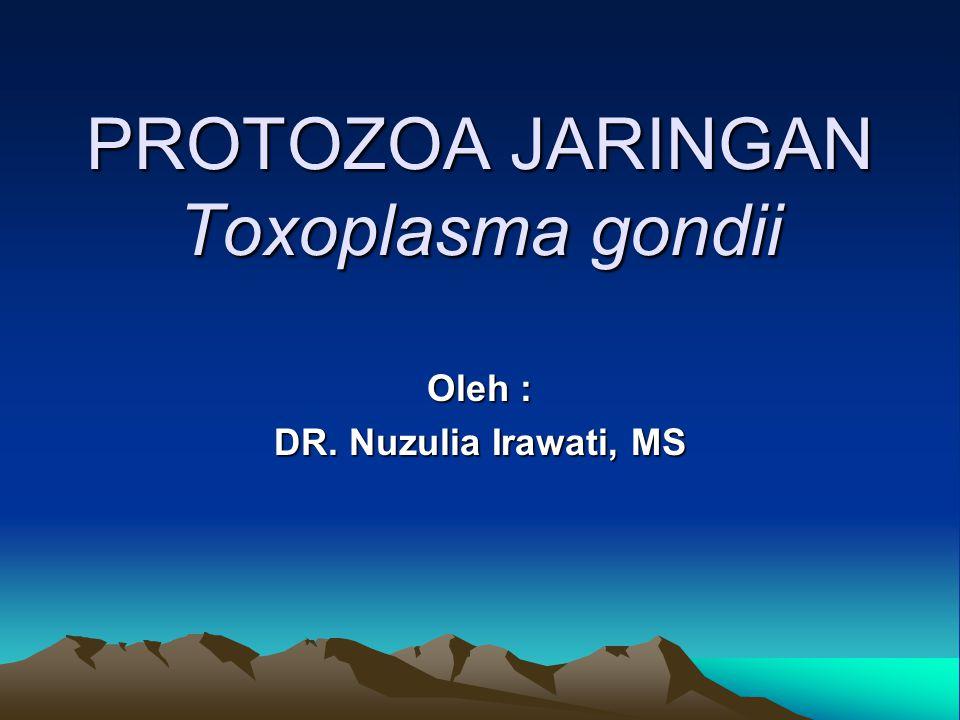 PROTOZOA JARINGAN Toxoplasma gondii