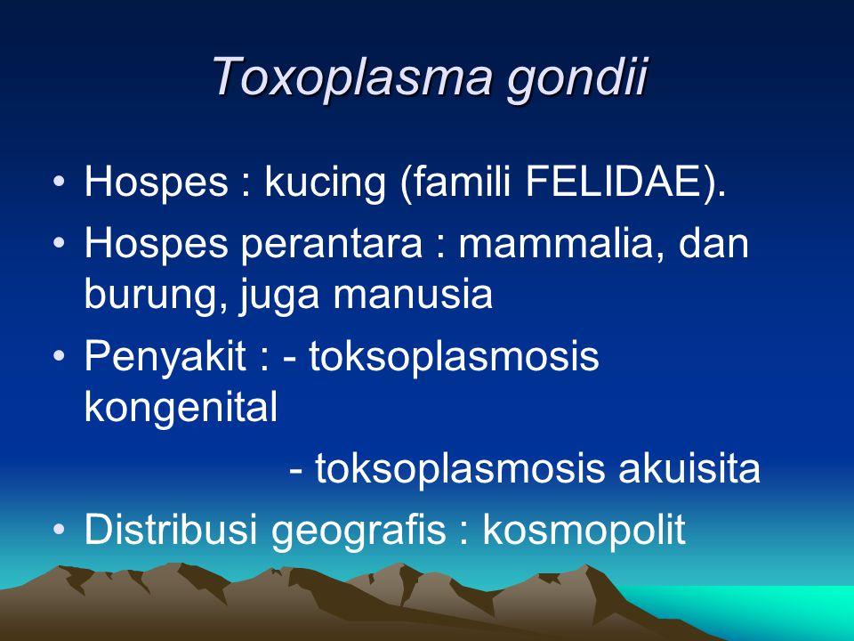 Toxoplasma gondii Hospes : kucing (famili FELIDAE).