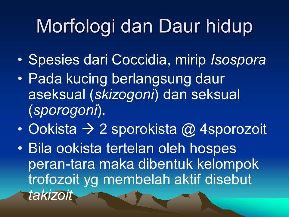 Morfologi dan Daur hidup