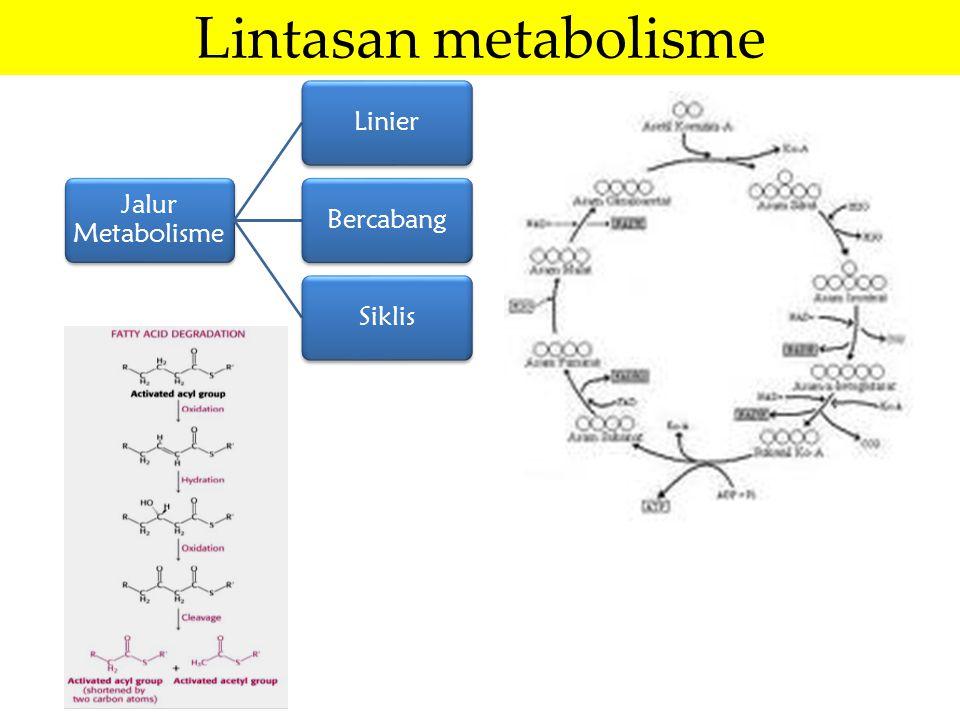 Lintasan metabolisme Jalur Metabolisme Linier Bercabang Siklis