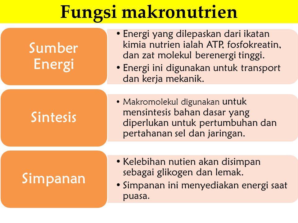 Fungsi makronutrien Sumber Energi Simpanan Sintesis
