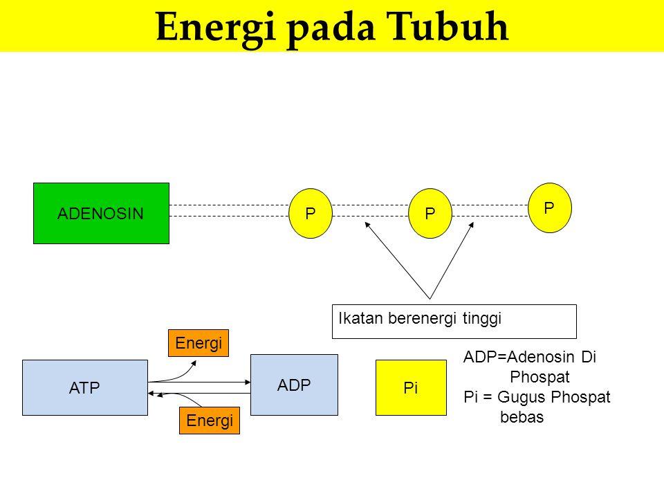 Energi pada Tubuh ADENOSIN P Ikatan berenergi tinggi ATP ADP Pi