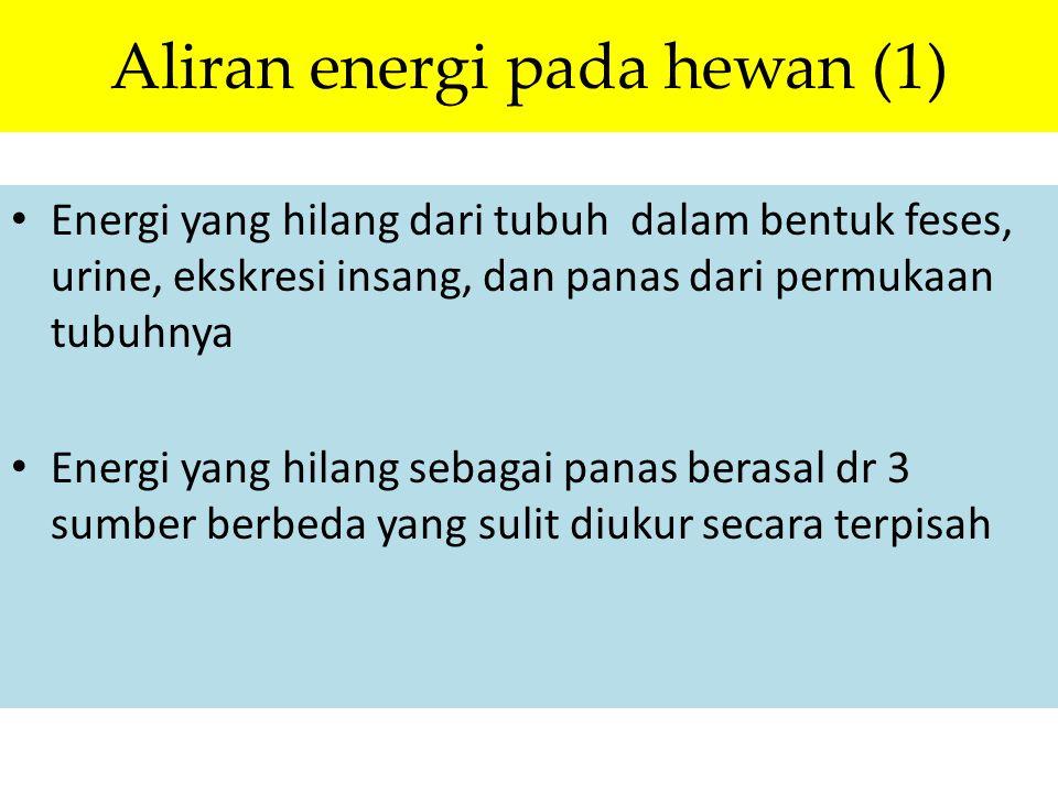 Aliran energi pada hewan (1)