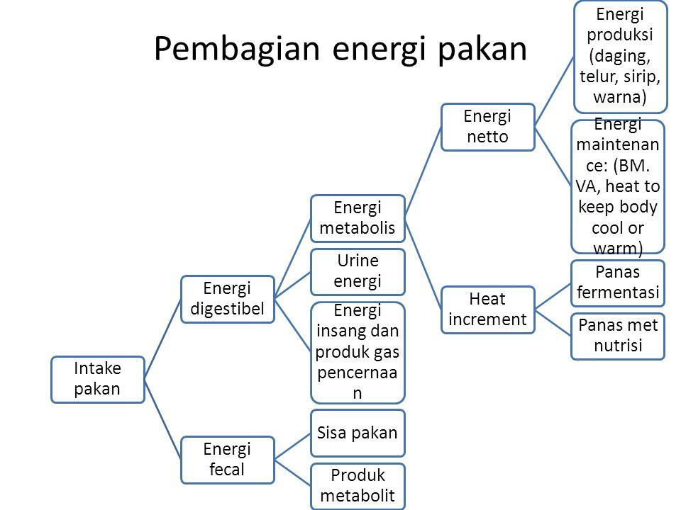 Pembagian energi pakan
