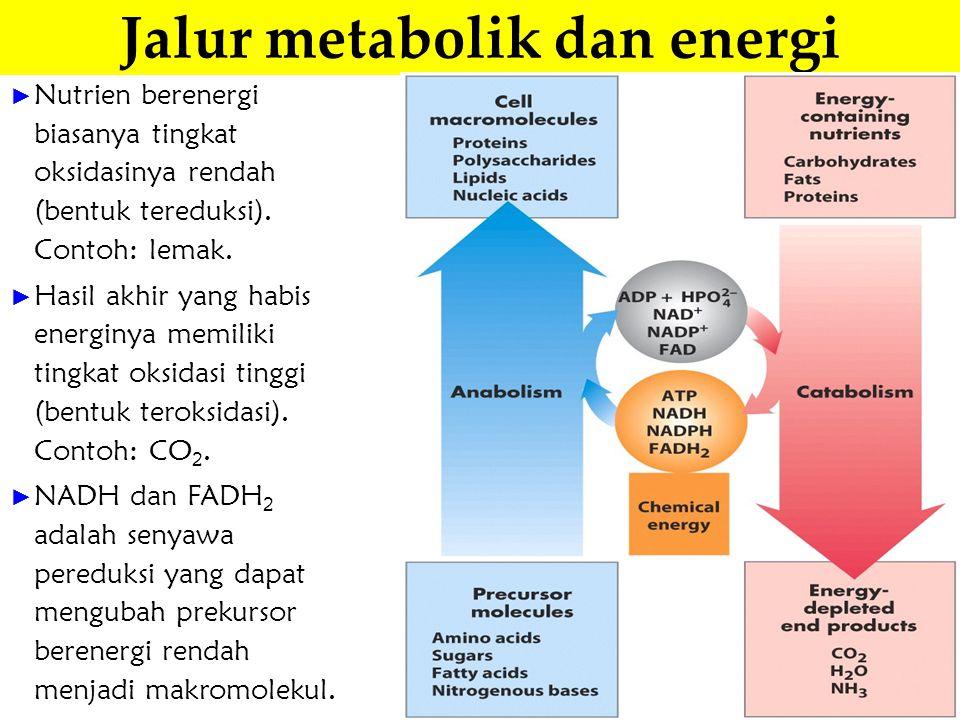 Jalur metabolik dan energi
