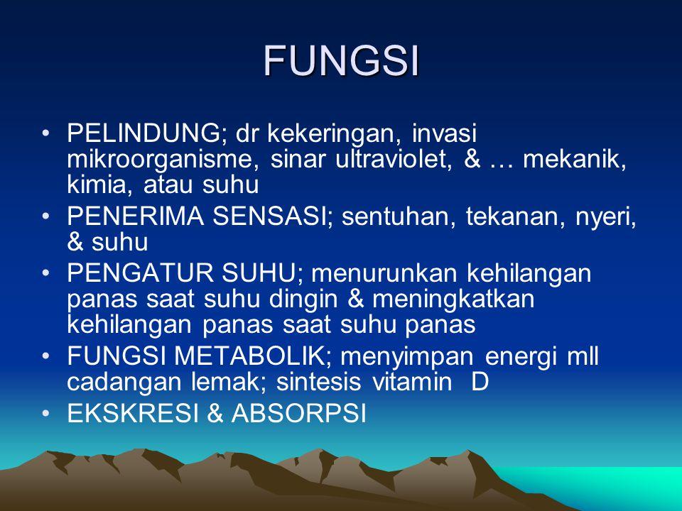FUNGSI PELINDUNG; dr kekeringan, invasi mikroorganisme, sinar ultraviolet, & … mekanik, kimia, atau suhu.
