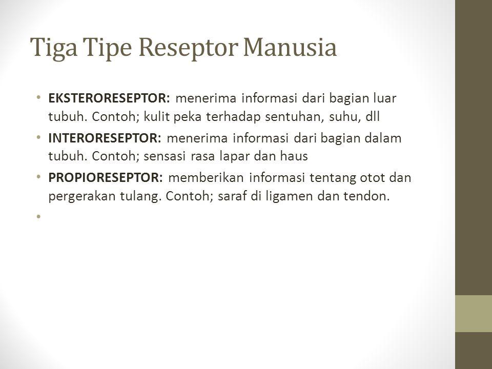 Tiga Tipe Reseptor Manusia