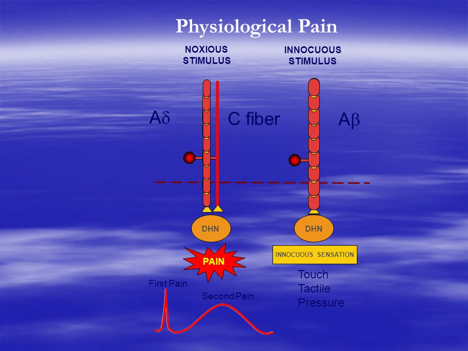 Physiological Pain A C fiber A Touch Tactile Pressure