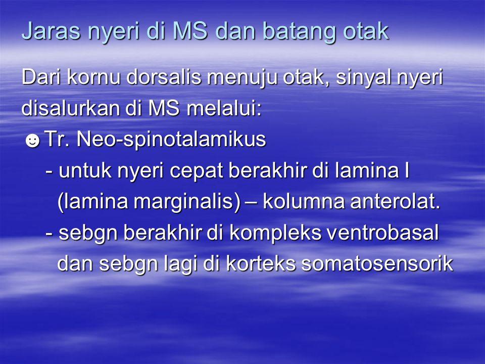 Jaras nyeri di MS dan batang otak