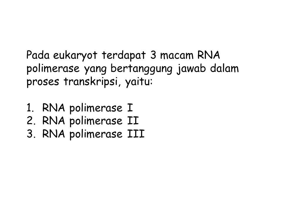 Pada eukaryot terdapat 3 macam RNA polimerase yang bertanggung jawab dalam proses transkripsi, yaitu: