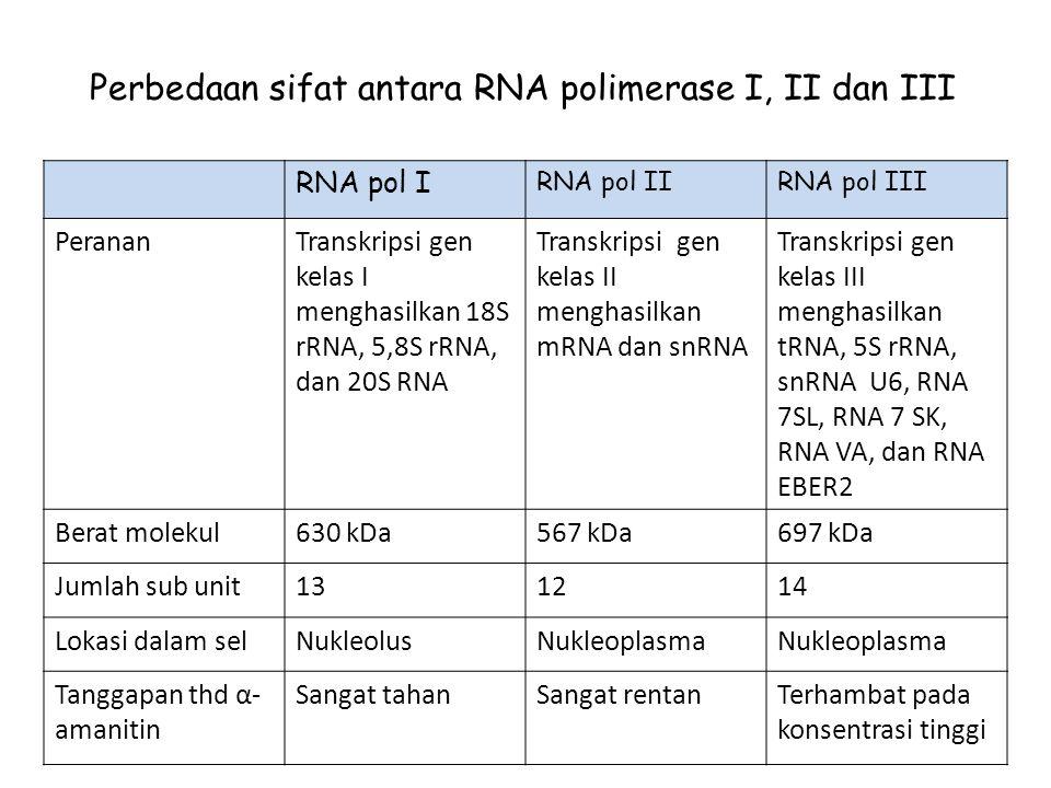 Perbedaan sifat antara RNA polimerase I, II dan III
