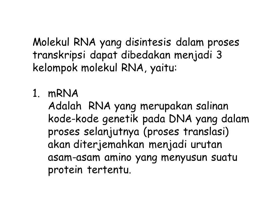 Molekul RNA yang disintesis dalam proses transkripsi dapat dibedakan menjadi 3 kelompok molekul RNA, yaitu: