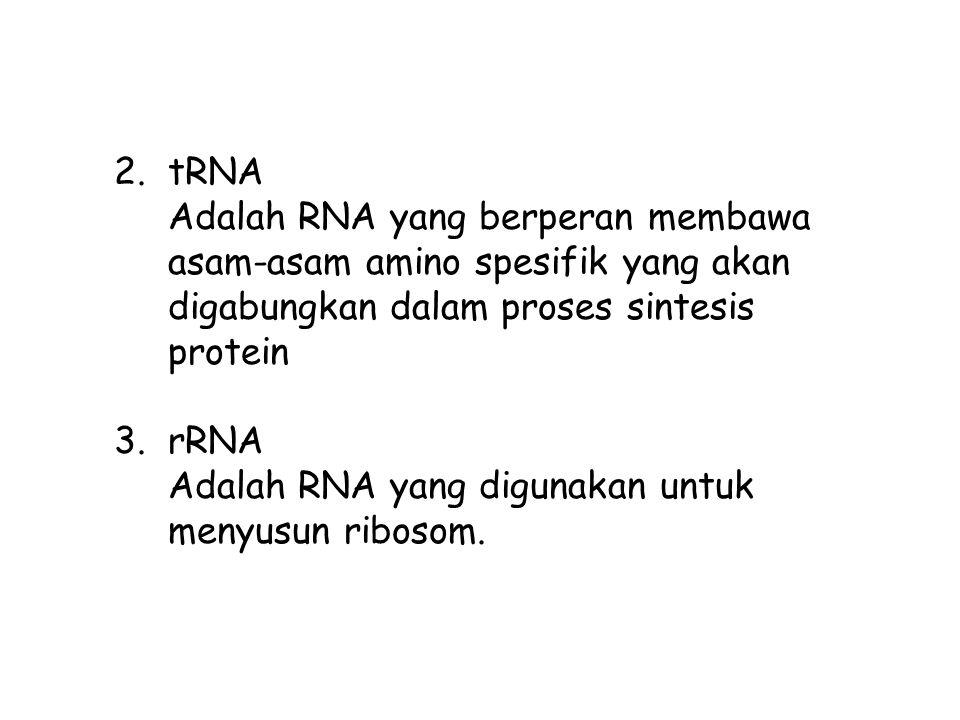 tRNA Adalah RNA yang berperan membawa asam-asam amino spesifik yang akan digabungkan dalam proses sintesis protein.