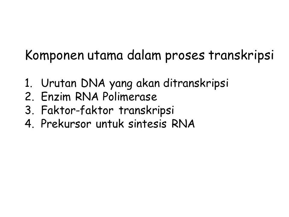 Komponen utama dalam proses transkripsi