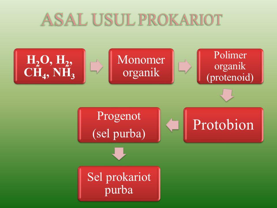 Polimer organik (protenoid)
