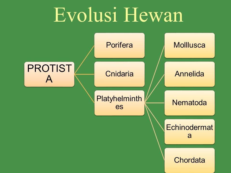 Evolusi Hewan PROTISTA Porifera Cnidaria Platyhelminthes Molllusca