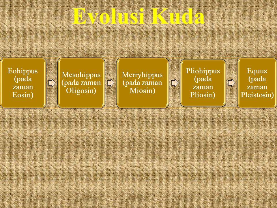 Evolusi Kuda Eohippus (pada zaman Eosin)