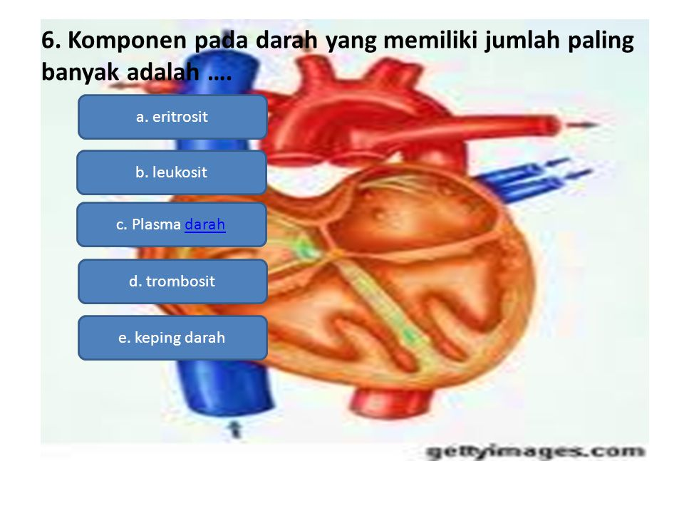 6. Komponen pada darah yang memiliki jumlah paling banyak adalah ….