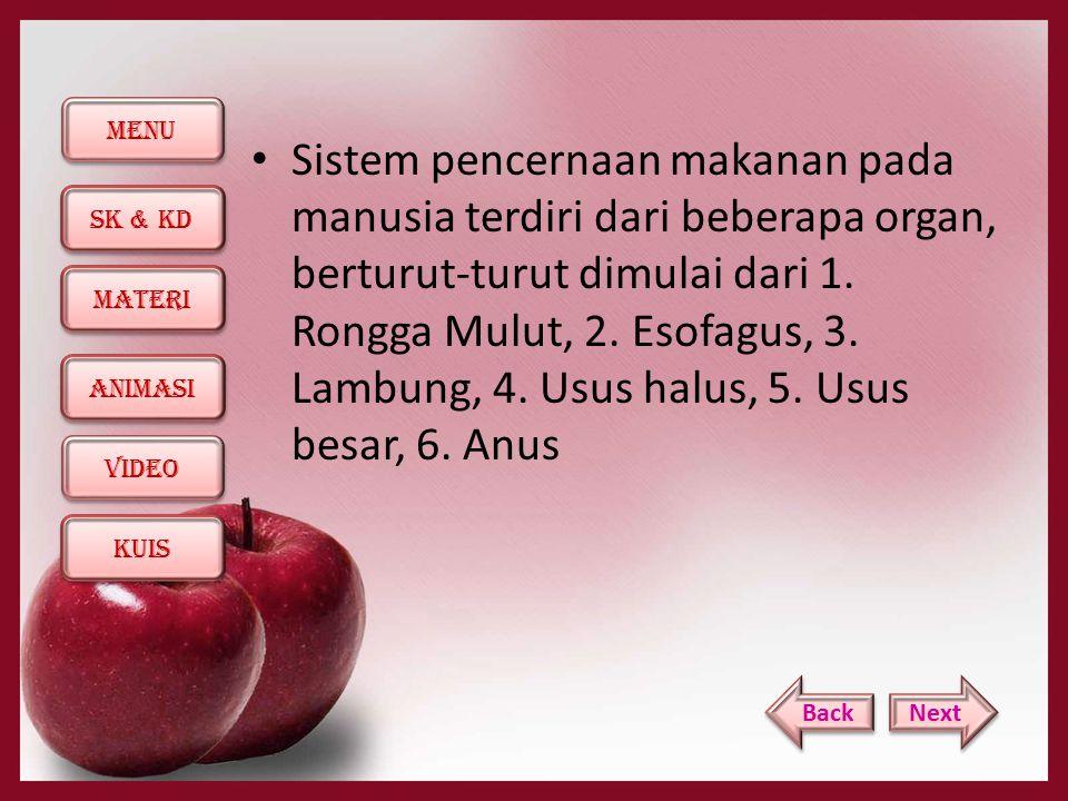 Sistem pencernaan makanan pada manusia terdiri dari beberapa organ, berturut-turut dimulai dari 1. Rongga Mulut, 2. Esofagus, 3. Lambung, 4. Usus halus, 5. Usus besar, 6. Anus