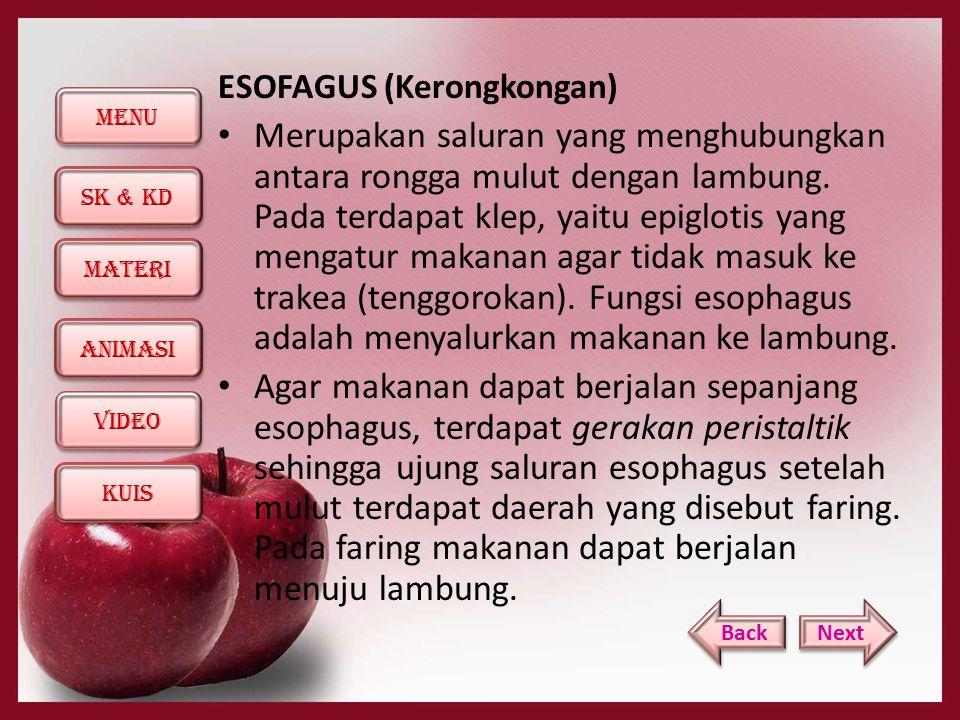 ESOFAGUS (Kerongkongan)