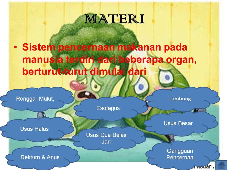 Sistem pencernaan makanan pada manusia terdiri dari beberapa organ, berturut-turut dimulai dari