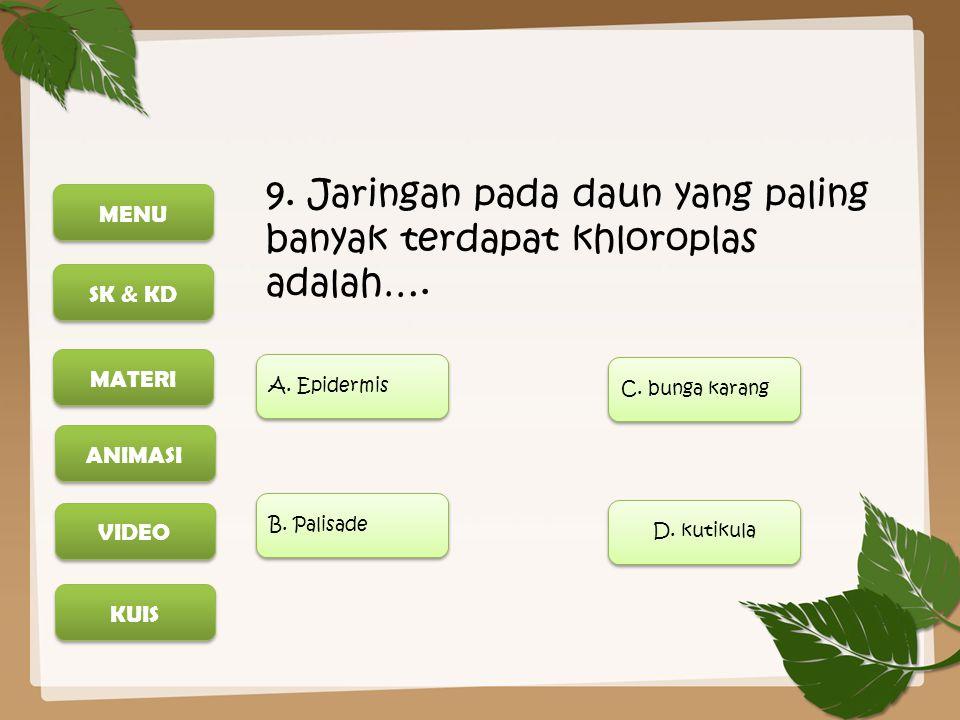 9. Jaringan pada daun yang paling banyak terdapat khloroplas adalah….