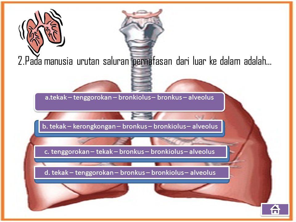 a.tekak – tenggorokan – bronkiolus – bronkus – alveolus